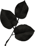 jss_oohhlala_rose leaves 1 black.png