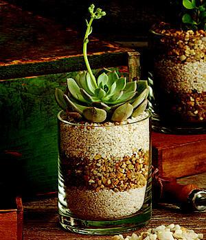 КАк упаковать подарочные зелёные растения