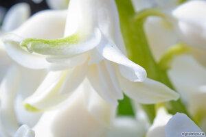 О чистоте (цветок, чистота)