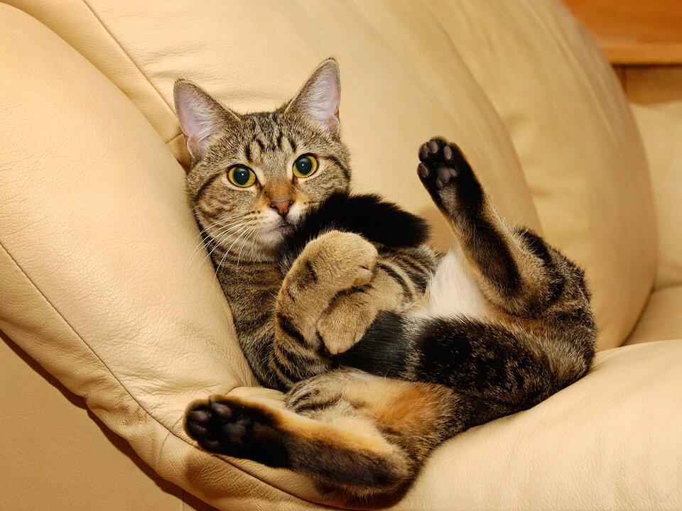 Добавить.  Вопрос о животных непрост, Зверюшкам не делайте гадости, Не дергайте кошек за хвост. кошки.