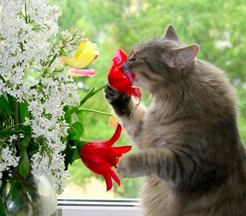 Позитивные, прикольные открытки с животными и надписями и цветами