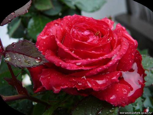 http://img-fotki.yandex.ru/get/6212/106854303.80/0_84168_1a084dcd_L.png