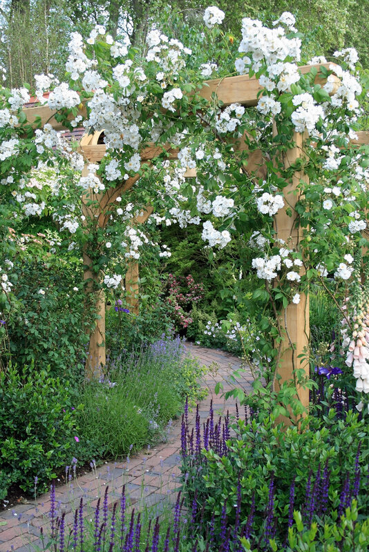 Path leading through garden under rose pergola