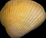VC_SeaPrincess_El88.png