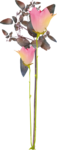 MRD_RT_purple-pink flower.png