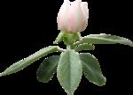 «Bee_Calming» 0_876b5_85eb6680_S