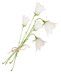 «whitebell flowers»  0_879c6_a32ef978_S