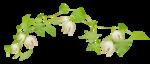 «whitebell flowers»  0_879d9_39fe61d4_S