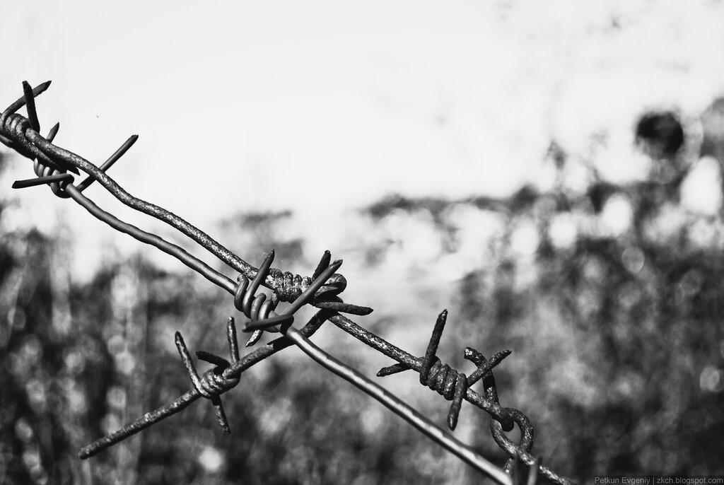 Автор: Петкун Евгений, блог Евгения Владимировича, фото, фотография: Колючая проволока