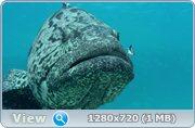 Большой Барьерный риф / Great Barrier Reef (2011) BDRip + HDRip
