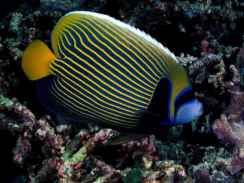 фото подводный мир