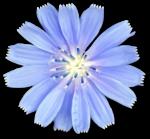 floral wonderland