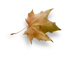 natali_autumn11_leaf1-sh.png