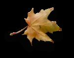 natali_autumn11_leaf1-sh.png
