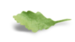 natali_autumn11_leaf6-sh.png
