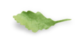 natali_autumn11_leaf6-sh2.png
