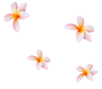 MRD_SeaMemories_pink flower.png