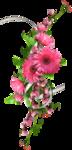 Carena Pink Gerbra Cluster 5.png