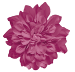 picturedesigns_fb2_flower1.png