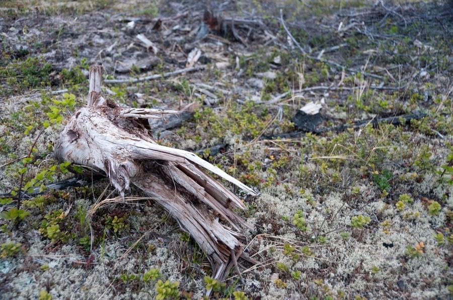 Природа острова Сахалин