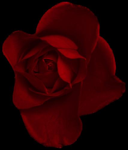 Resmi çiçekler clip art flowers daisy en güzel çiçekler