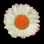«Musical Flowers» 0_8a316_e5b0b0d1_S
