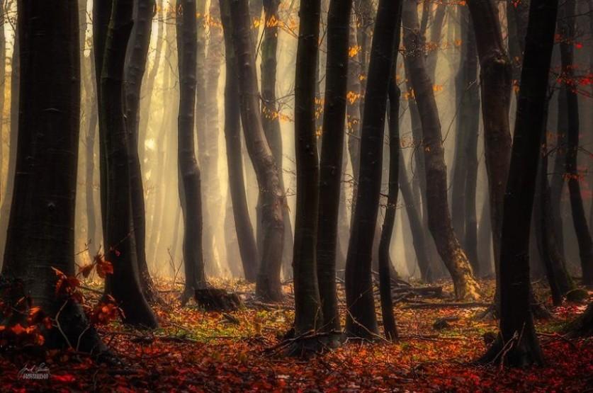 Скрыто под листьями.