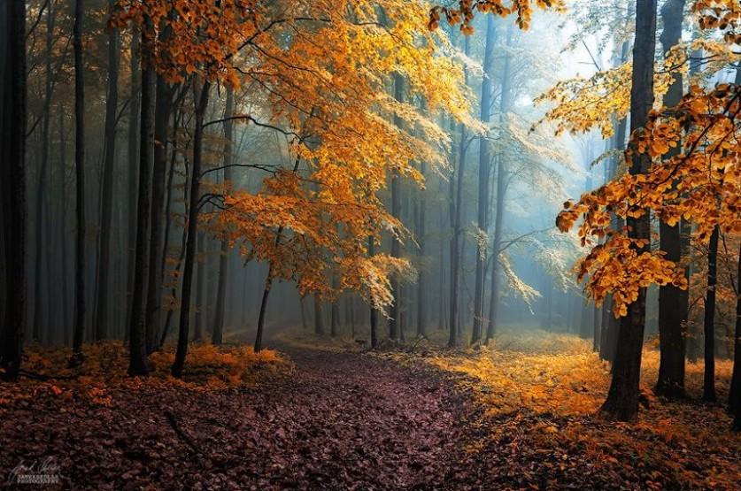 Осенний лес в просторах Моравии, Чехия… Фотограф Янек Седлар (Janek Sedlar)