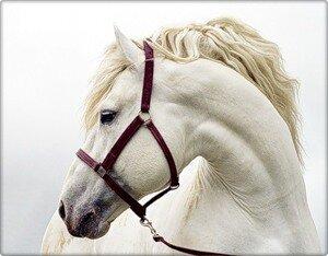 """Предпросмотр схемы вышивки  """"Конь """" ."""