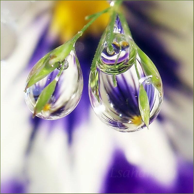 Стихи капельки на цветах