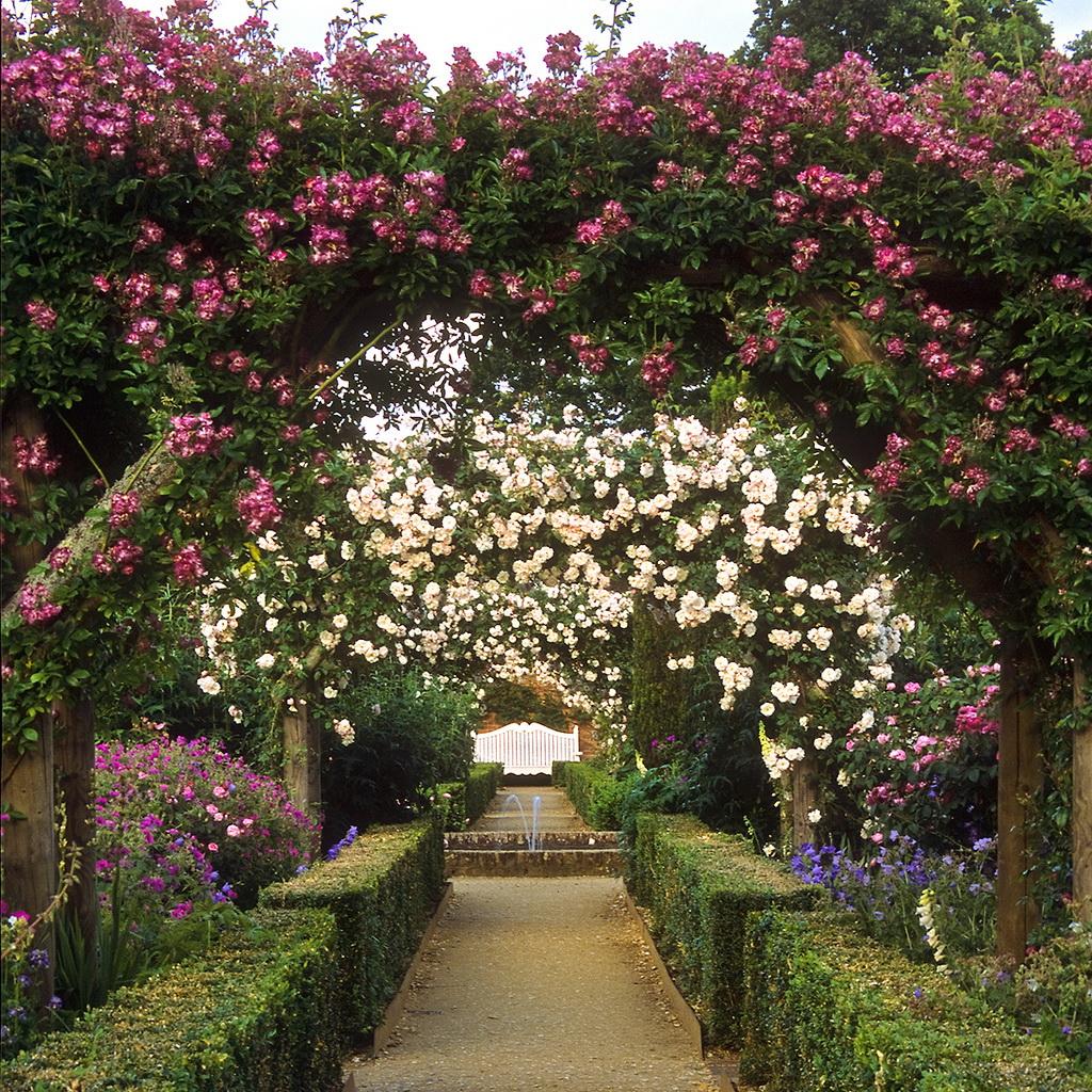 сад из роз фото