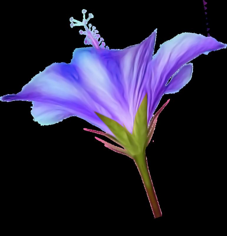 Eflatun renkli çiçekler,leylak çiçekleri,mor zambak çiçekleri,mor gül çiçekleri,mor