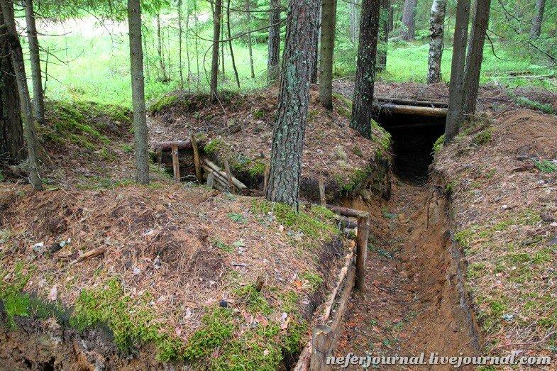 отделка леса тверской области фото окопов любые