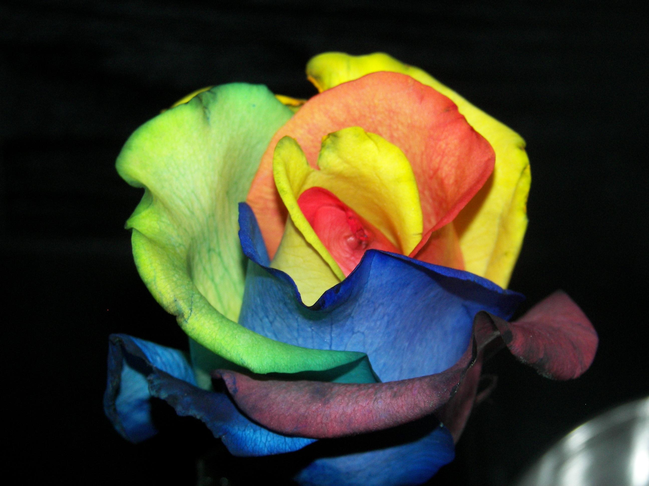 Цветы синего цвета: названия и фото 23