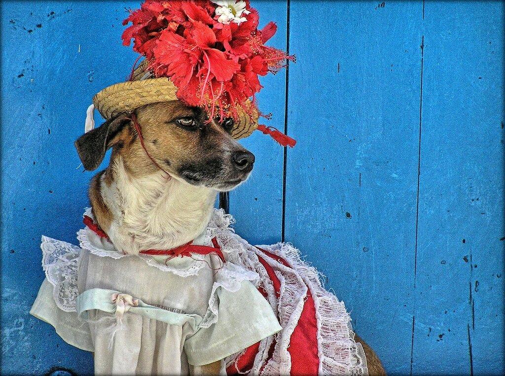 Кубинская модница