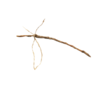 Mystique PF painted branch .png