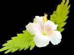 NLD PF Flower 2.png