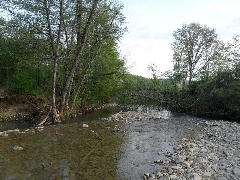 Утром у реки