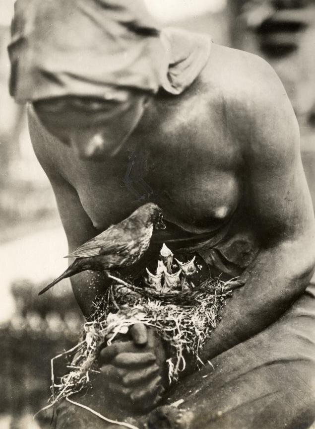 Blackbird's nest,Berlijn, Duitsland 1932.