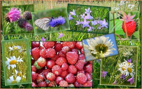 С первым днем лета!  Какая красота впереди! открытки фото рисунки картинки поздравления