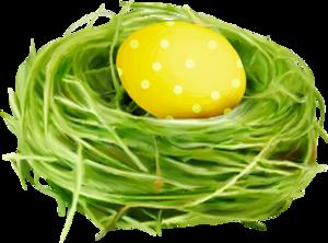 гнезда с яйцами