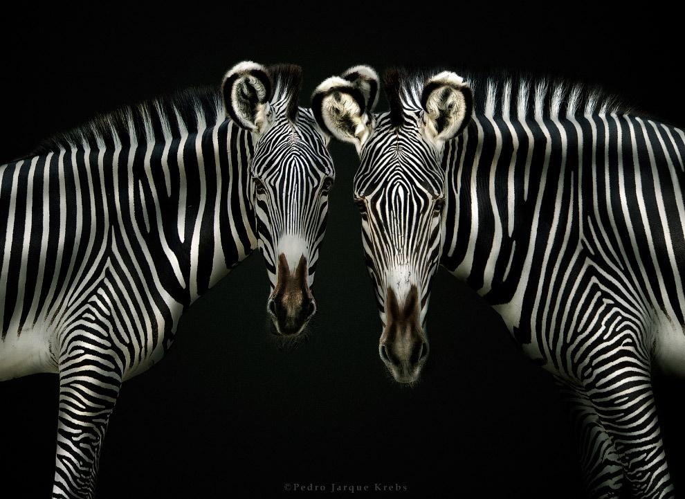 Педро Харке: очень красивые фотографии диких животных