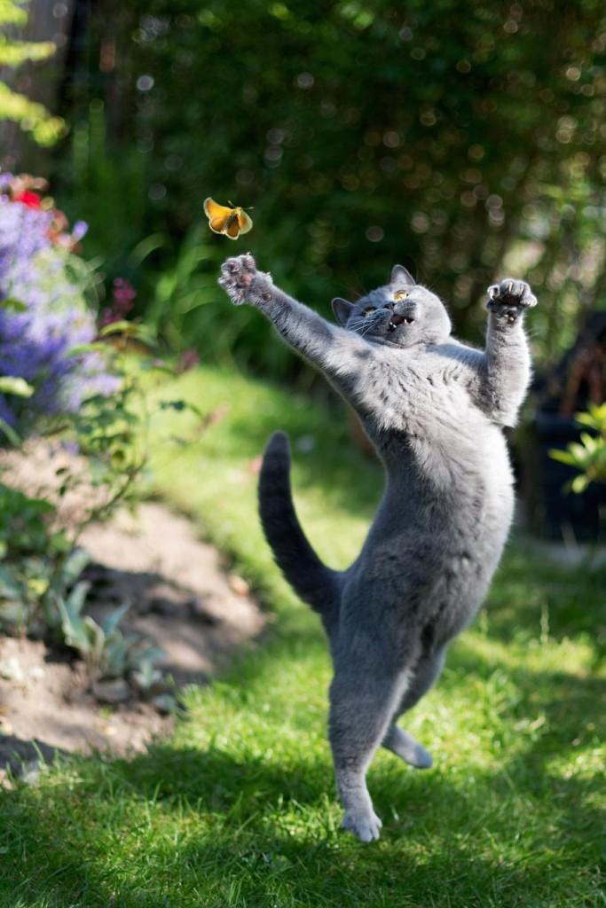 Бабочки и все, все все!