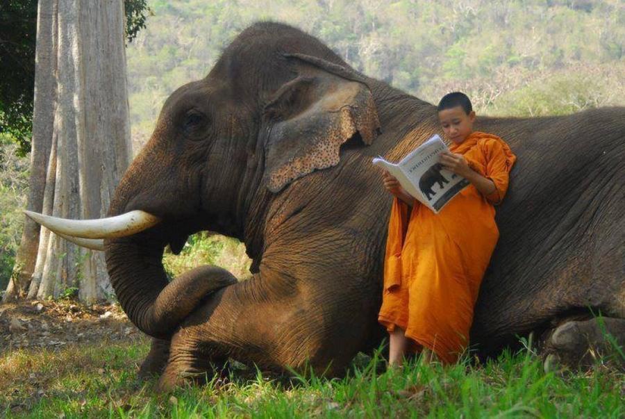 1. Когда купил слона и читаешь инструкцию по применению