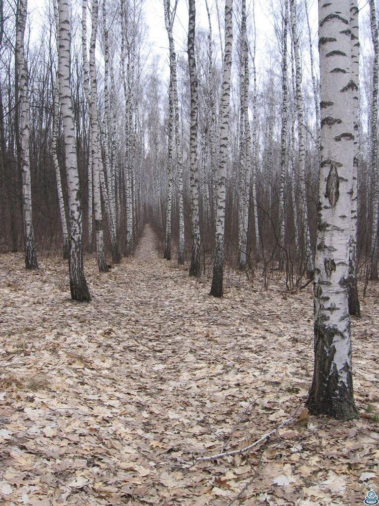 Аллея в юбилейном лесу