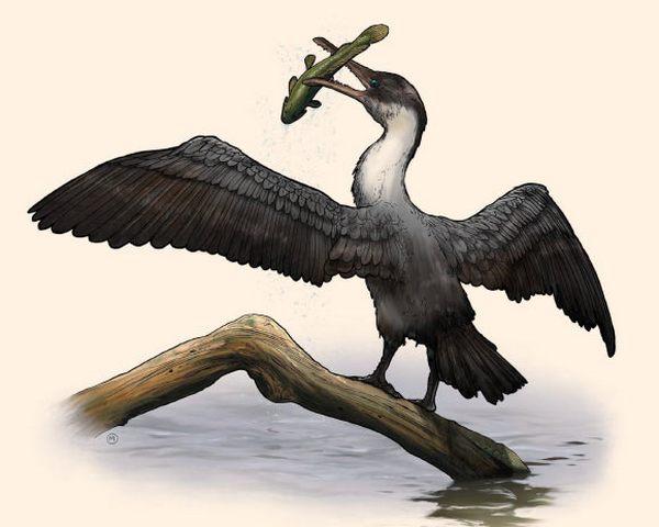 ВАрктике обнаружили останки огромной древней птицы