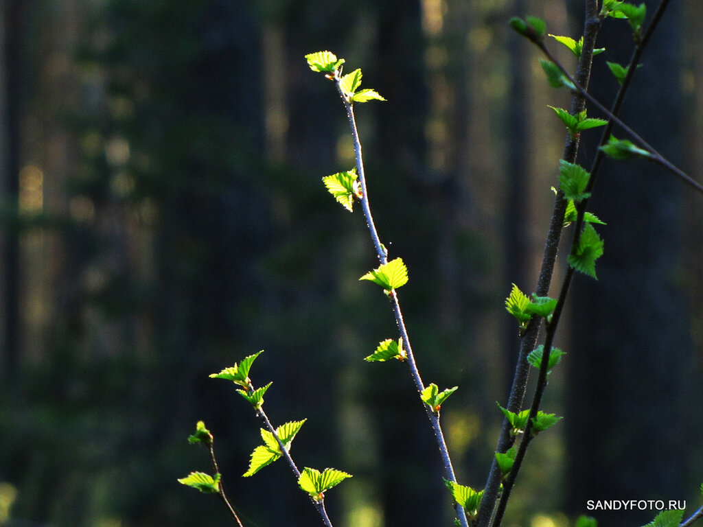 30 фотографий весеннего леса на ГРЭСе