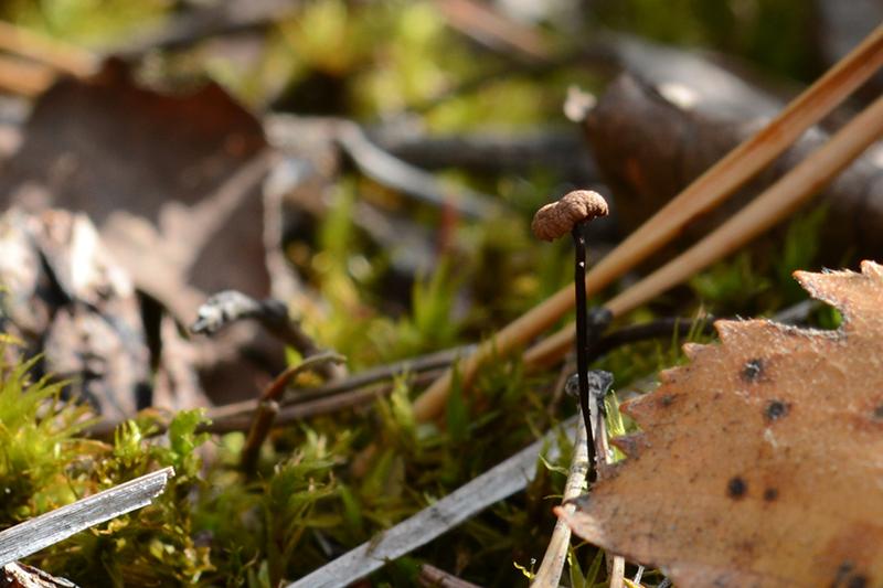 грибы 16.jpg