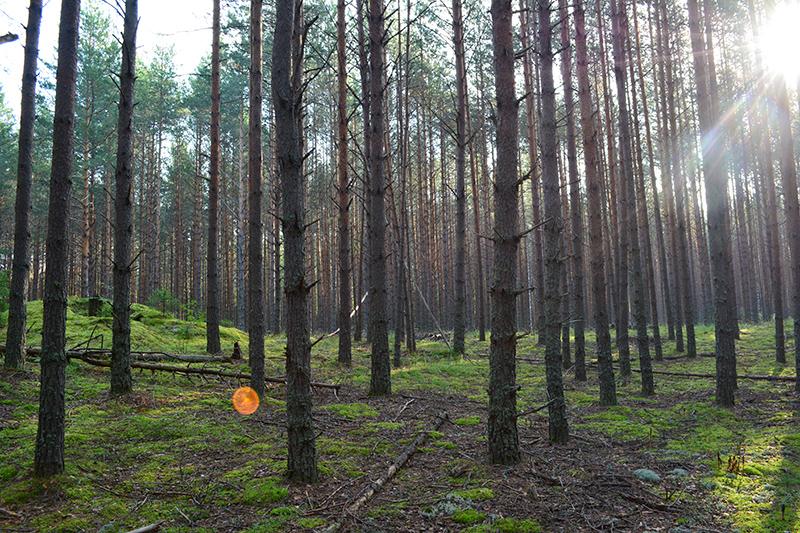 леса 28.jpg