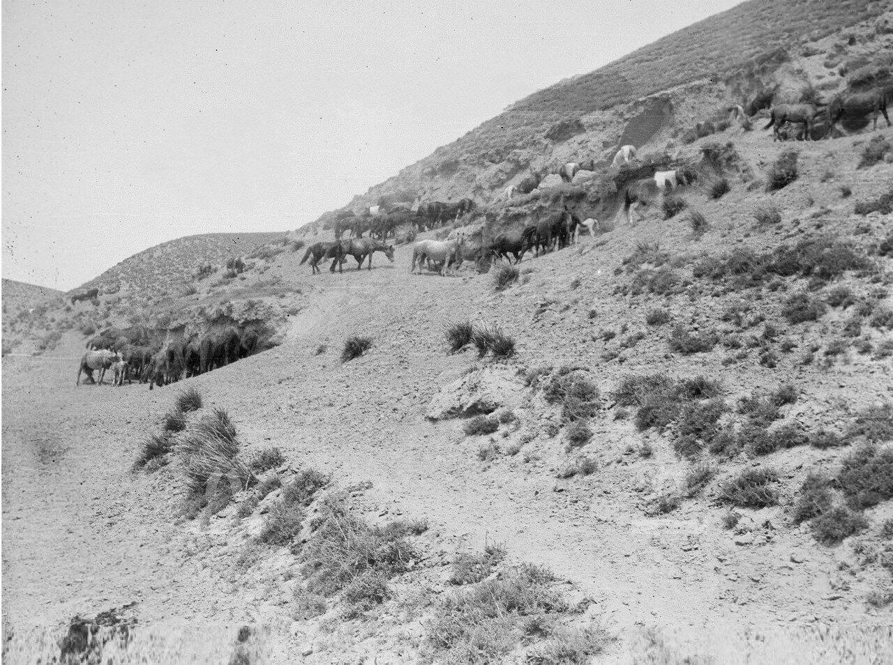 Окрестности Жыргалана. Лошади в полуденный зной на склоне холма